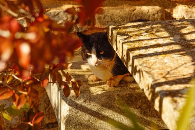 Cat taking in the sunshine