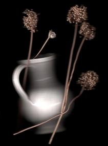 Allium sphaerophalalen:Pulmunato Garlic seed pods, snail and white porcelain